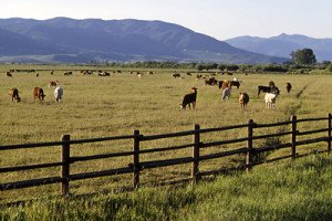 Colorado Agriculture Tax Status Update